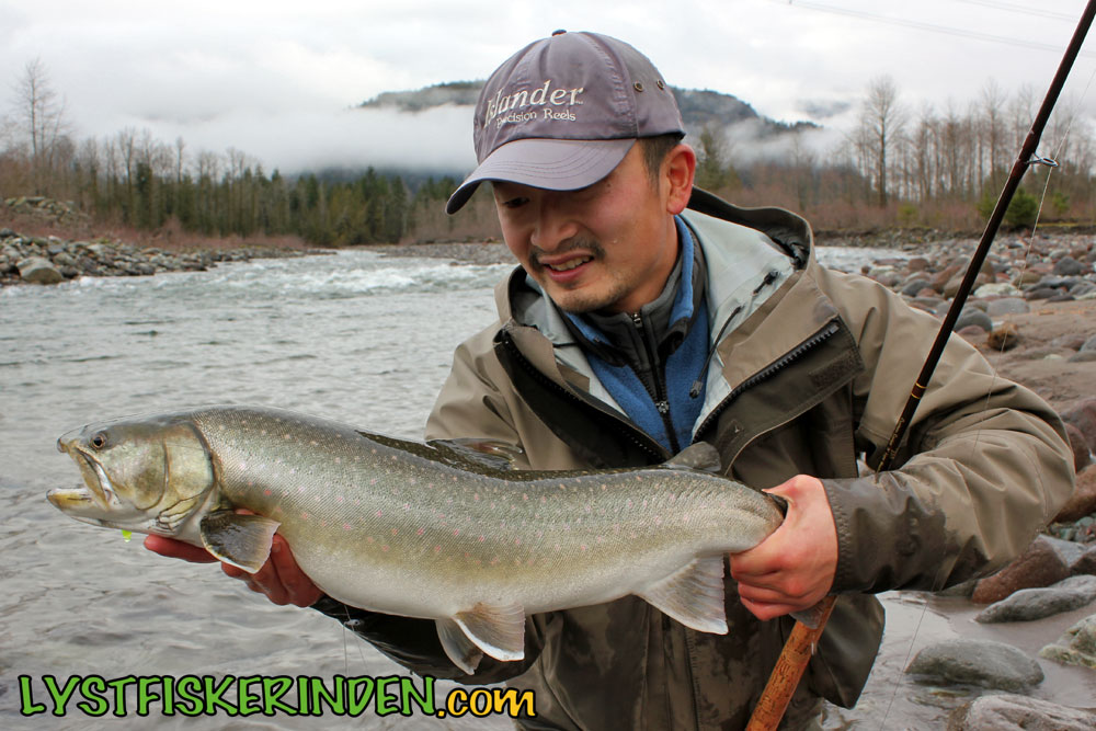 Cheakamus River bull trout