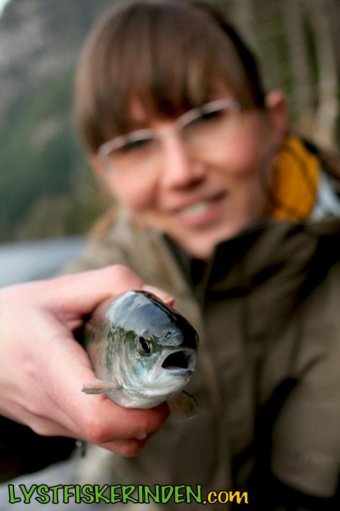 Fraser Valley Rainbow Trout