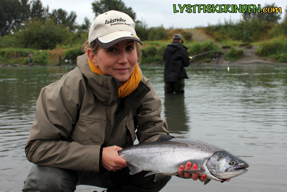 Sølvlaks fra Chilliwack/Vedder River