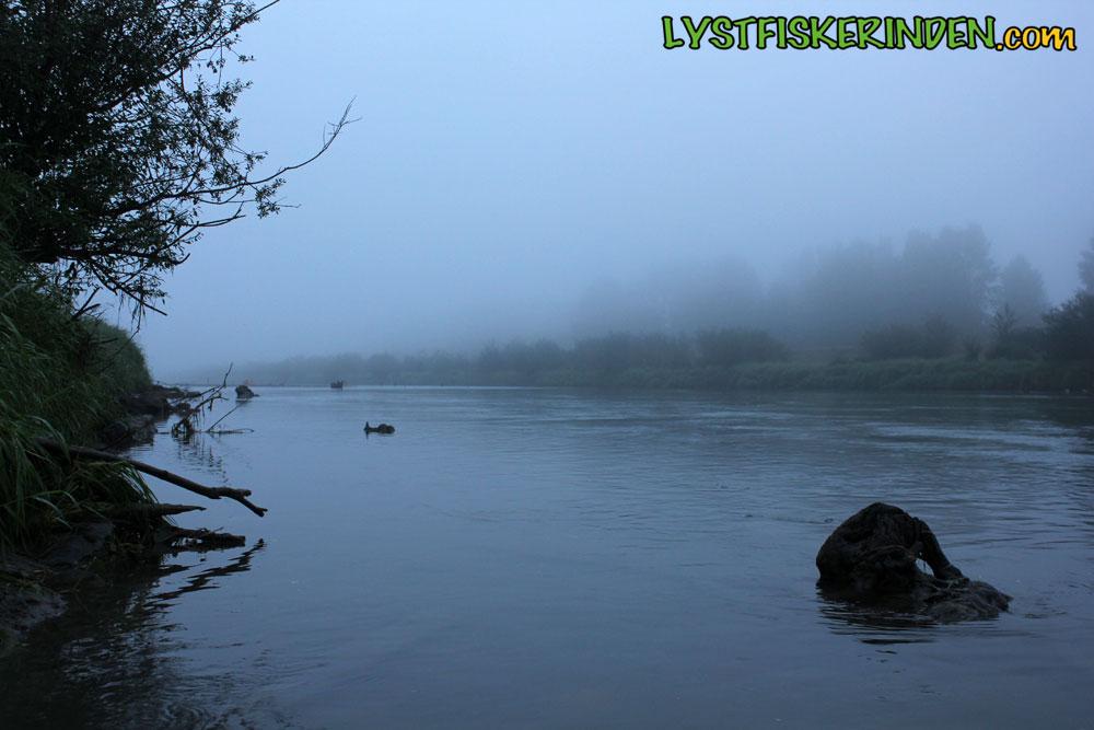 Tidlig morgen ved Chilliwack/Vedder River