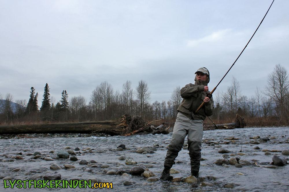 Steelhead fiskeri i Chilliwack River