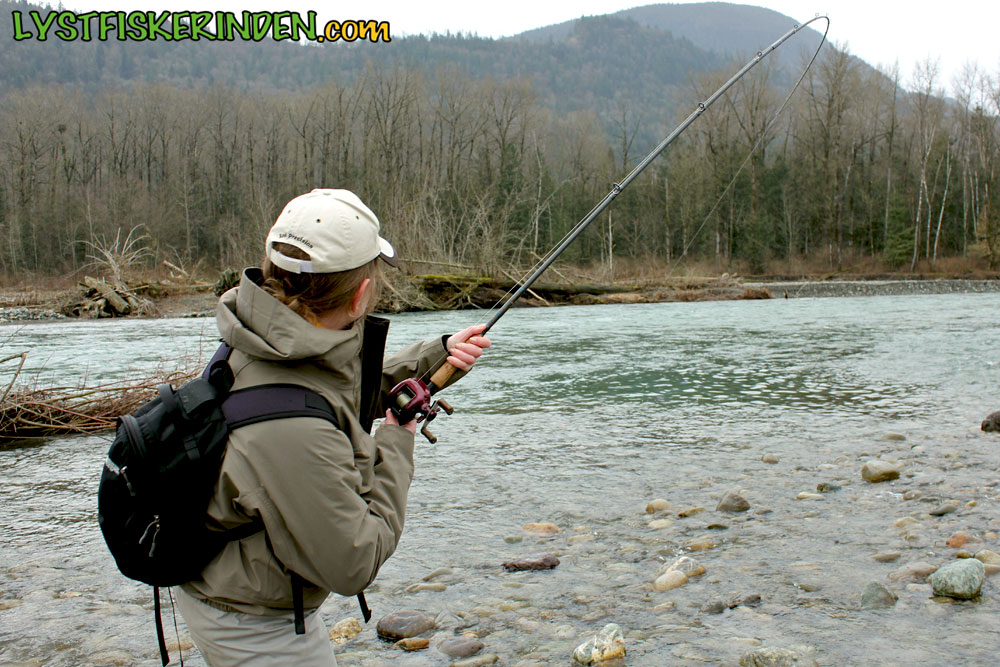 Steelhead i Chilliwack River